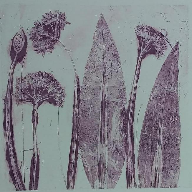 Janet Stevenson,  East Lothian Wild Garlic, acrylic on board, gel print 1/5,  25x25cm, £30
