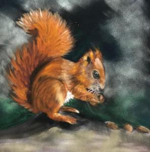 Valerie Duncan, Red Squirrel.  Pastel on paper 24cm x 24cm £50 unframed, £75 Framed
